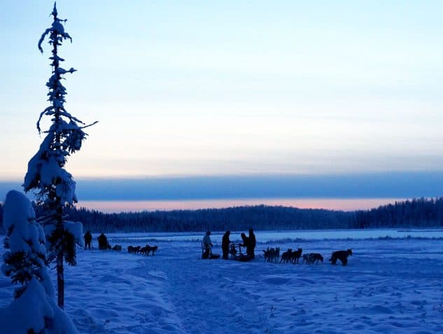 dog sled things to do in alaska