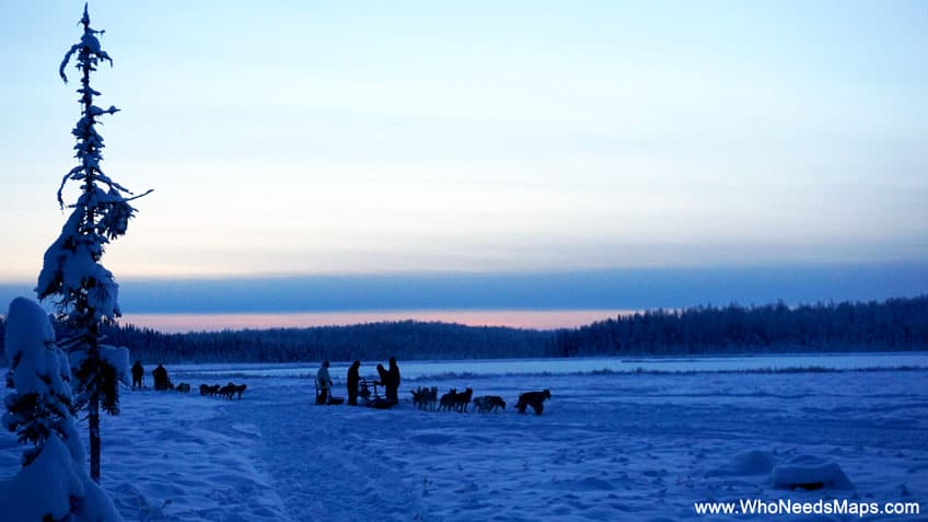 dog mushing pictures in alaska