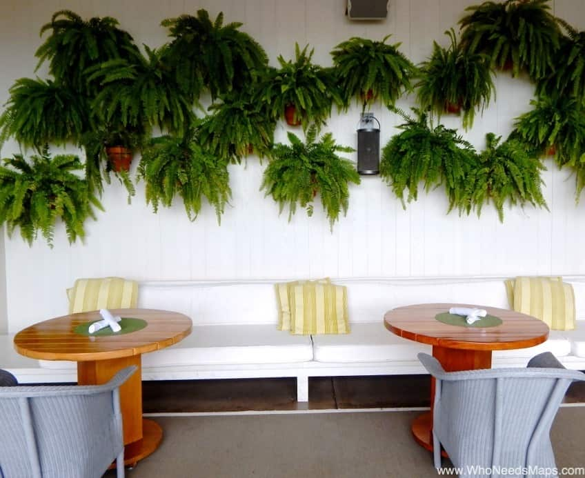 the modern honolulu fern walls