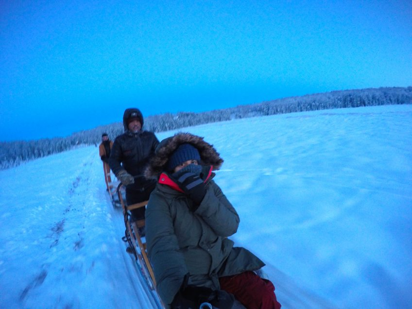 dog sledding things to do in alaska