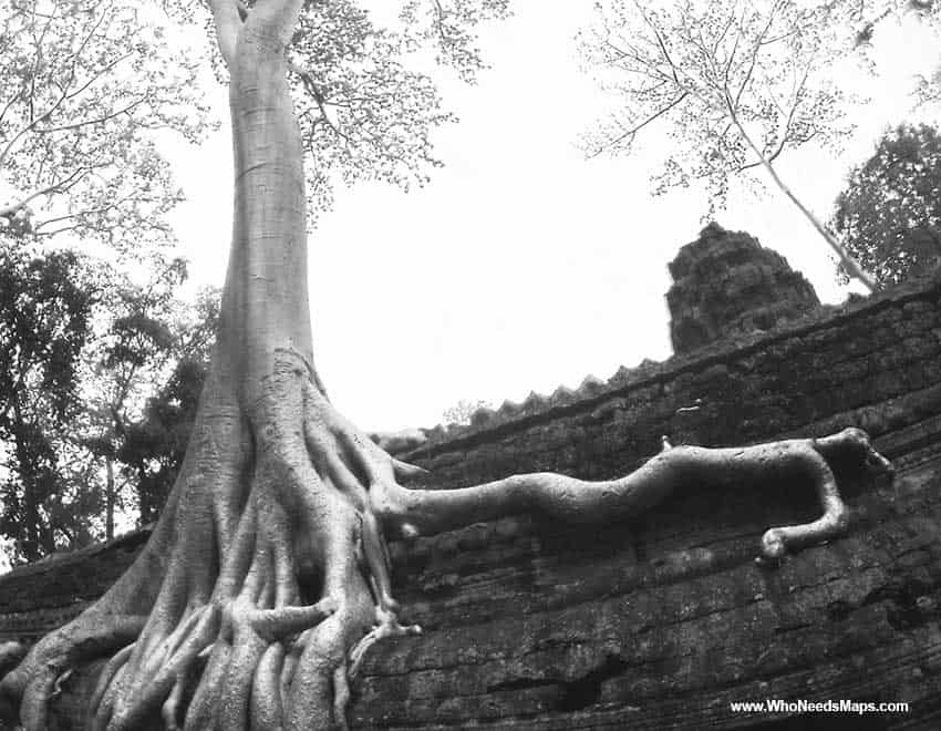 Giant tree on ta prohm - Angkor Wat pictures