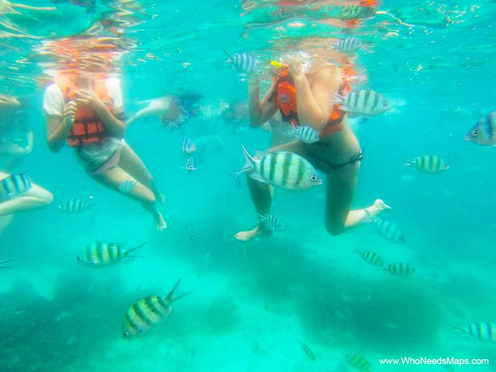 Snorkeling - Things to do in Koh Rong