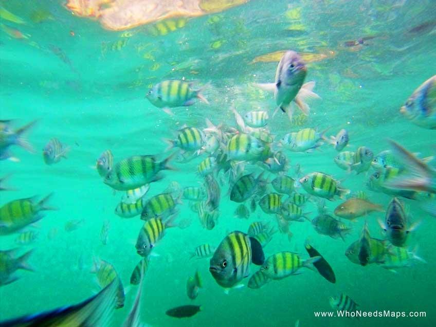 snorkeling in thailand-koh-phiphi