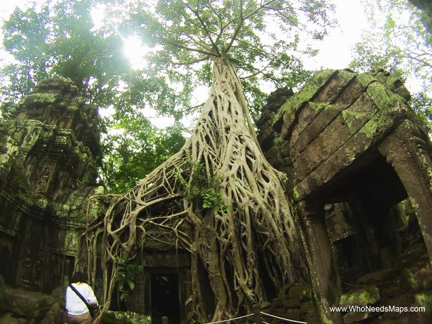 Ta Prohm Tree Temple - Angkor Wat pictures