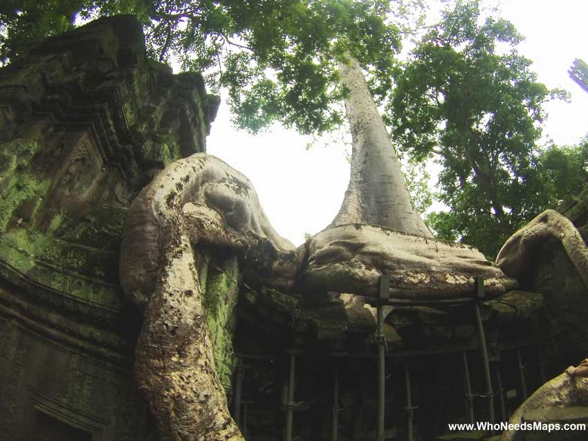 Tree Temple - Angkor Wat