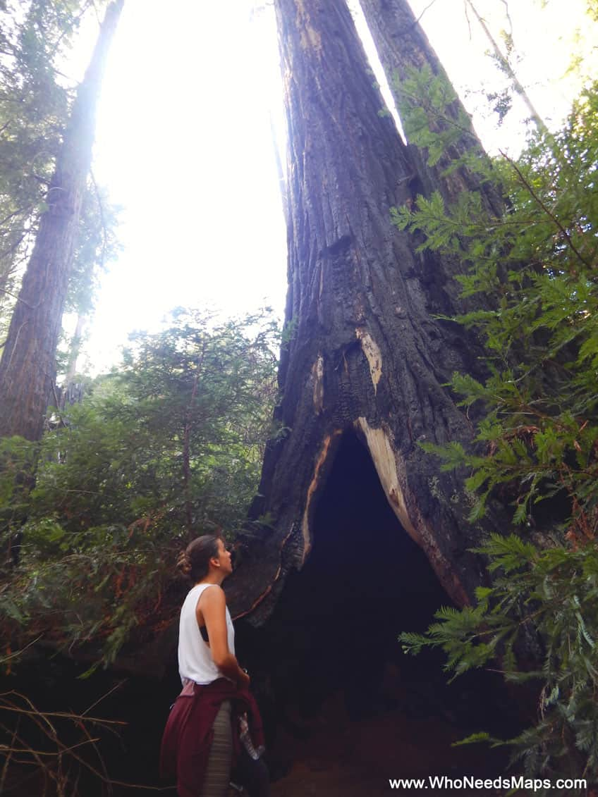 big sur city guide sequoia trees