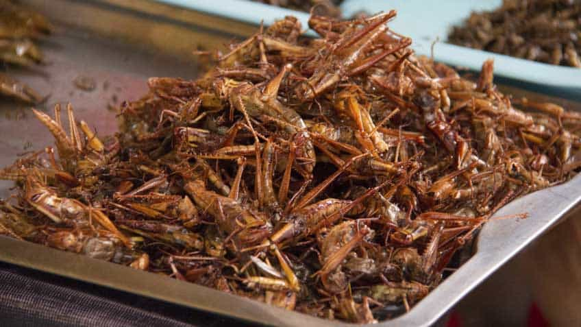 fried-grasshopper