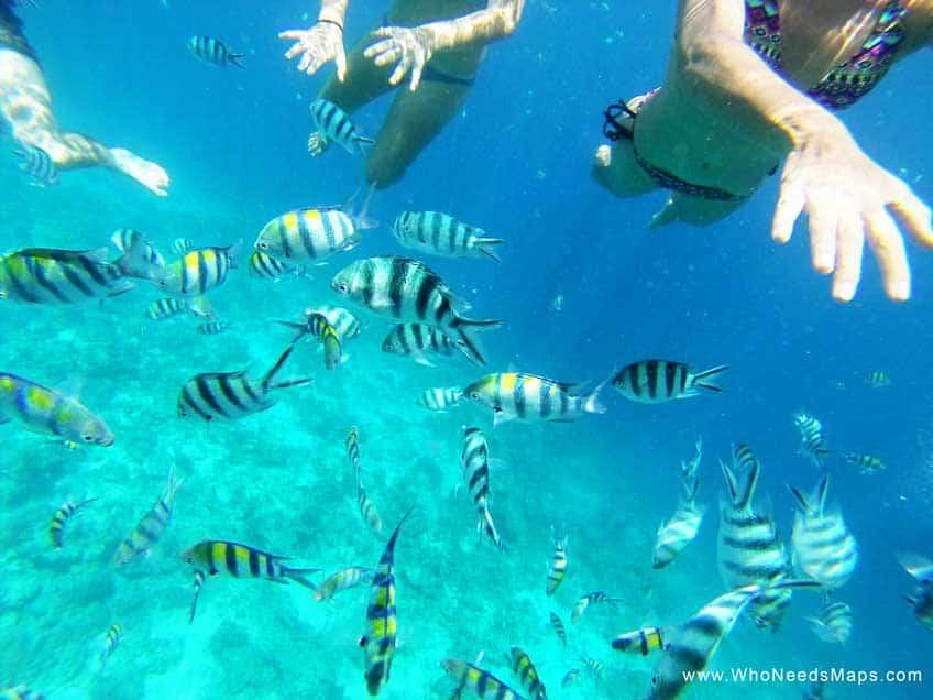 snorkeling philippines - bohol